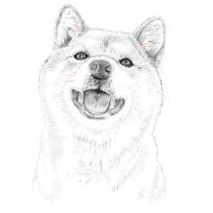 リアルな絵の描き方-柴犬のスケッチの書き方31