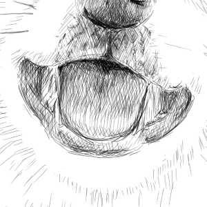 リアルな絵の描き方-柴犬の口の書き方