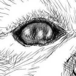 リアルな絵の描き方-柴犬の右目の書き方