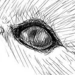 リアルな絵の描き方-柴犬の左目の書き方