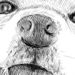 リアルな絵の描き方-柴犬の鼻の書き方