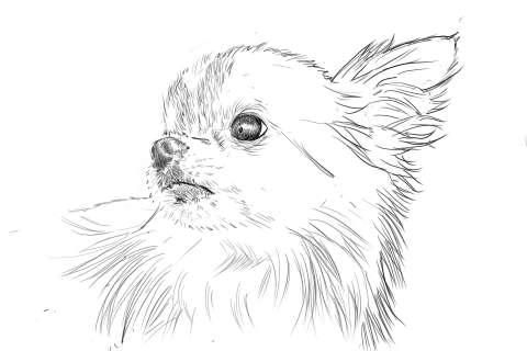 リアルな絵の描き方-チワワ犬の描き方10