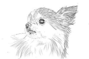 リアルな絵の描き方-チワワ犬の描き方11