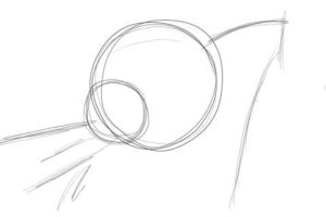 リアルな絵の描き方-チワワ犬の描き方2