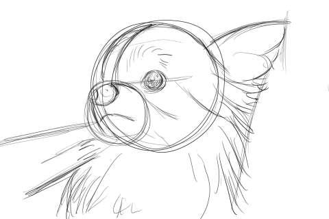 リアルな絵の描き方-チワワ犬の描き方4