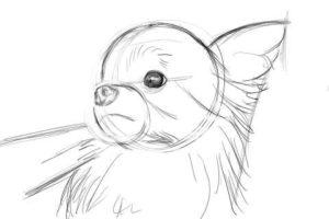 リアルな絵の描き方-チワワ犬の描き方5