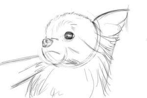 リアルな絵の描き方-チワワ犬の描き方6