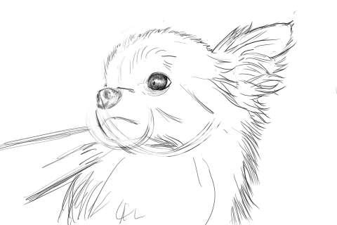 リアルな絵の描き方-チワワ犬の描き方7