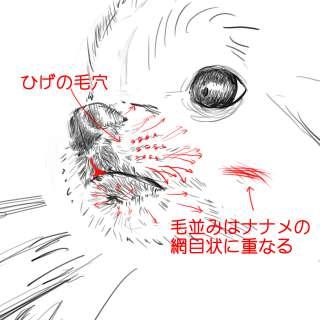 リアルな絵の描き方-チワワ犬の描き方8-2