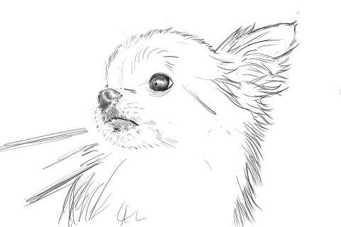 リアルな絵の描き方-チワワ犬の描き方8