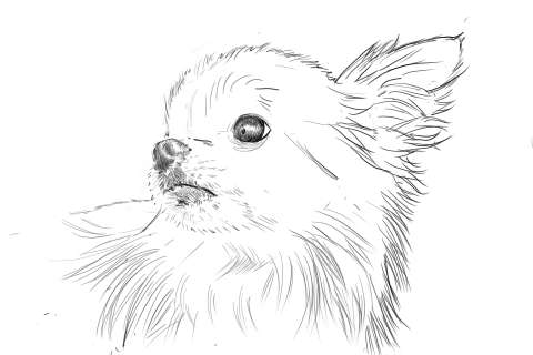 リアルな絵の描き方-チワワ犬の描き方9