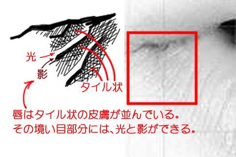 リアルな唇の絵の描き方6-2