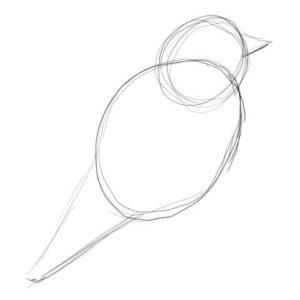 リアルな絵の描き方-小鳥の描き方1