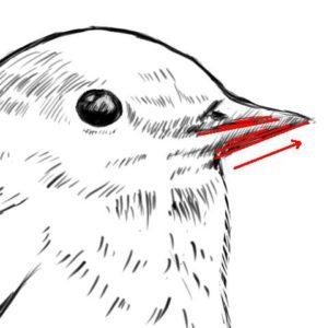 リアルな絵の描き方-小鳥の描き方10-2