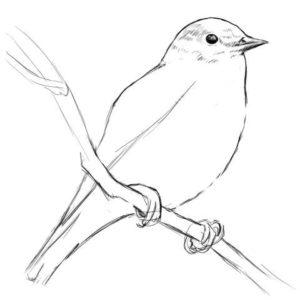 リアルな絵の描き方-小鳥の描き方10