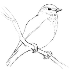 リアルな絵の描き方-小鳥の描き方11