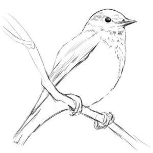 リアルな絵の描き方-小鳥の描き方12