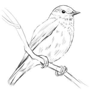 リアルな絵の描き方-小鳥の描き方13