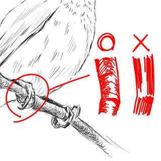 リアルな絵の描き方-小鳥の描き方14-2