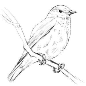 リアルな絵の描き方-小鳥の描き方14