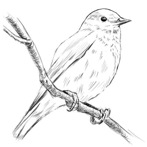 リアルな絵の描き方-小鳥の描き方15