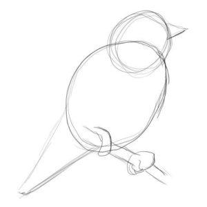 リアルな絵の描き方-小鳥の描き方2