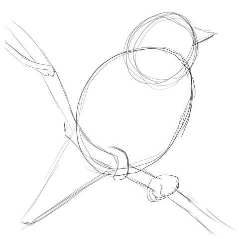 リアルな絵の描き方-小鳥の描き方3
