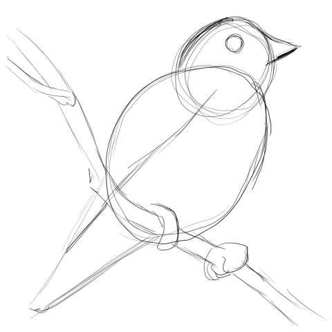 リアルな絵の描き方-小鳥の描き方4