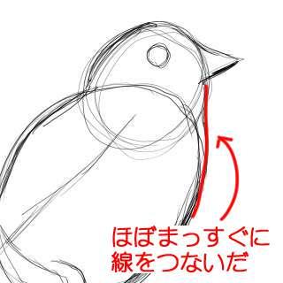 リアルな絵の描き方-小鳥の描き方5-2
