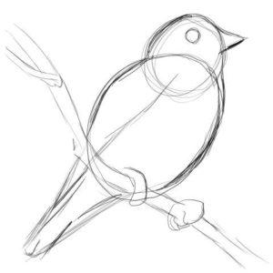 リアルな絵の描き方-小鳥の描き方5