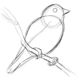 リアルな絵の描き方-小鳥の描き方6