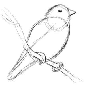 リアルな絵の描き方-小鳥の描き方7