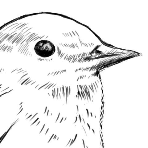 リアルな絵の描き方-小鳥の描き方8-2