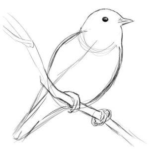 リアルな絵の描き方-小鳥の描き方8