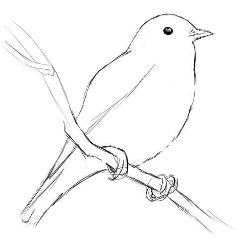 リアルな絵の描き方-小鳥の描き方9