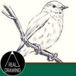リアルな絵の描き方-小鳥の書き方サムネイル