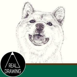 リアルな絵-柴犬の絵の書き方サムネイル-セピア