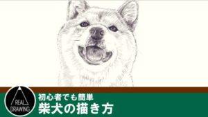 リアルな絵の描き方-柴犬の描き方