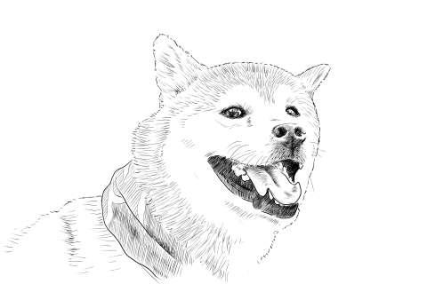 なぞり絵ー柴犬の描き方